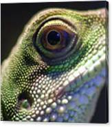 Eye Of Lizard Canvas Print