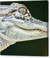 Eye Of The Alligator Canvas Print