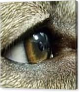 Eye Of The Canine Canvas Print