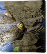 Eye Of The Crocodile Canvas Print