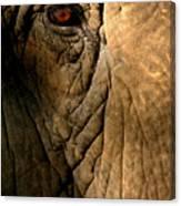 Eye Of The Elephant Canvas Print