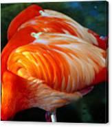 Eye Of The Flamingos Canvas Print