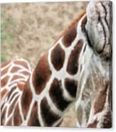 Eye Of The Giraffe. Canvas Print
