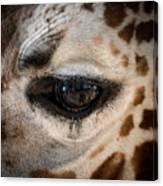 Eye Of The Giraffe Canvas Print