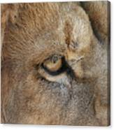 Eye Of The Lion #2 Canvas Print