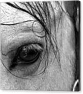 Eye Of  The Stallion Canvas Print