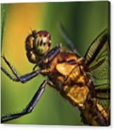 Eye To Eye Dragonfly Canvas Print
