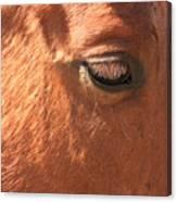 Eyelashes - Horse Close Up Canvas Print