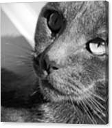 Eyes Of Russian Blue Canvas Print