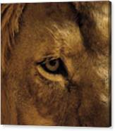 Eyes Of The Lion Color Canvas Print
