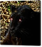Eyes Of The Panther Canvas Print