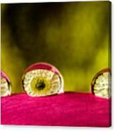Eyes Of The Petal Canvas Print