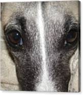 Eyes Whippet Canvas Print