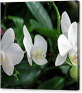 F11 Orchid Flowers Canvas Print