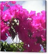 F15 Bougainvilleas Flowers Canvas Print