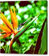 F21 Bird Of Paradise Flower Canvas Print