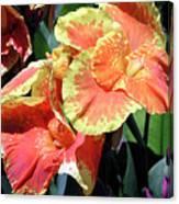 F24 Cannas Flower Canvas Print