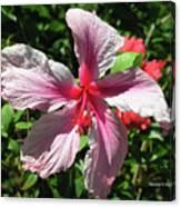 F5 Hibiscus Flower Hawaii Canvas Print