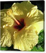 F9 Yellow Hibiscus Canvas Print