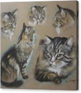 Faa Cat Collage Canvas Print