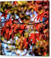 Fabulous Fall Canvas Print