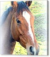 Face The Horse That Is Facing You   Canvas Print