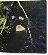 Face In The River Canvas Print