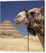 Face Of A Camel In Front Of A Pyramid Canvas Print