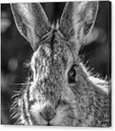 Face Of A Rabbit In Black And White Canvas Print