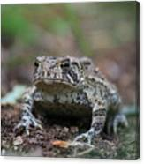 Face To Face With A Fowler Toad  Canvas Print