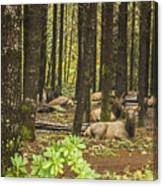 Faces In The Woods Canvas Print