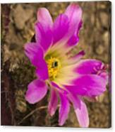 Faded Cactus Beauty Canvas Print