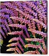 Faded Ferns Canvas Print