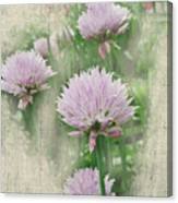 Faded Floral 11 Canvas Print