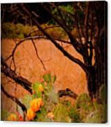 Fading Cactus Canvas Print
