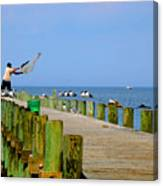 Fairhope Fisherman With Cast Net Canvas Print