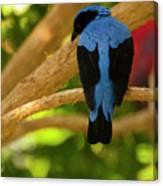 Fairy Bluebird Male Digital Oil  Canvas Print