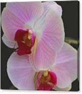 Fairy Blush Orchids Canvas Print
