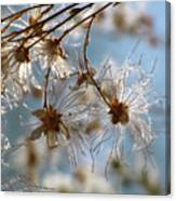 Fairy Flowers Canvas Print