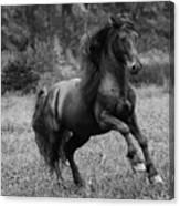 Fairy Tale Stallion Leaps Canvas Print