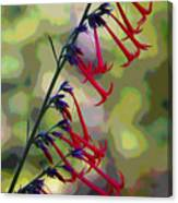 Fairy Trumpet Canvas Print