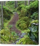 Fairytale Trail Canvas Print