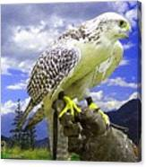 Falcon Being Trained H A Canvas Print