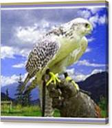 Falcon Being Trained H A With Decorative Ornate Printed Frame. Canvas Print