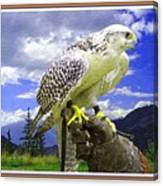 Falcon Being Trained H B With Decorative Ornate Printed Frame. Canvas Print