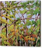 Fall 2 Canvas Print