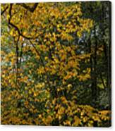 Fall 2010 12 Canvas Print