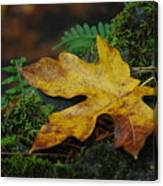 Fall Alone Canvas Print