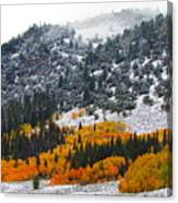 Fall And Winter Collide  Canvas Print