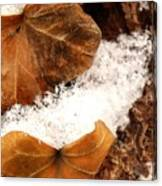 Fall And Winter Canvas Print